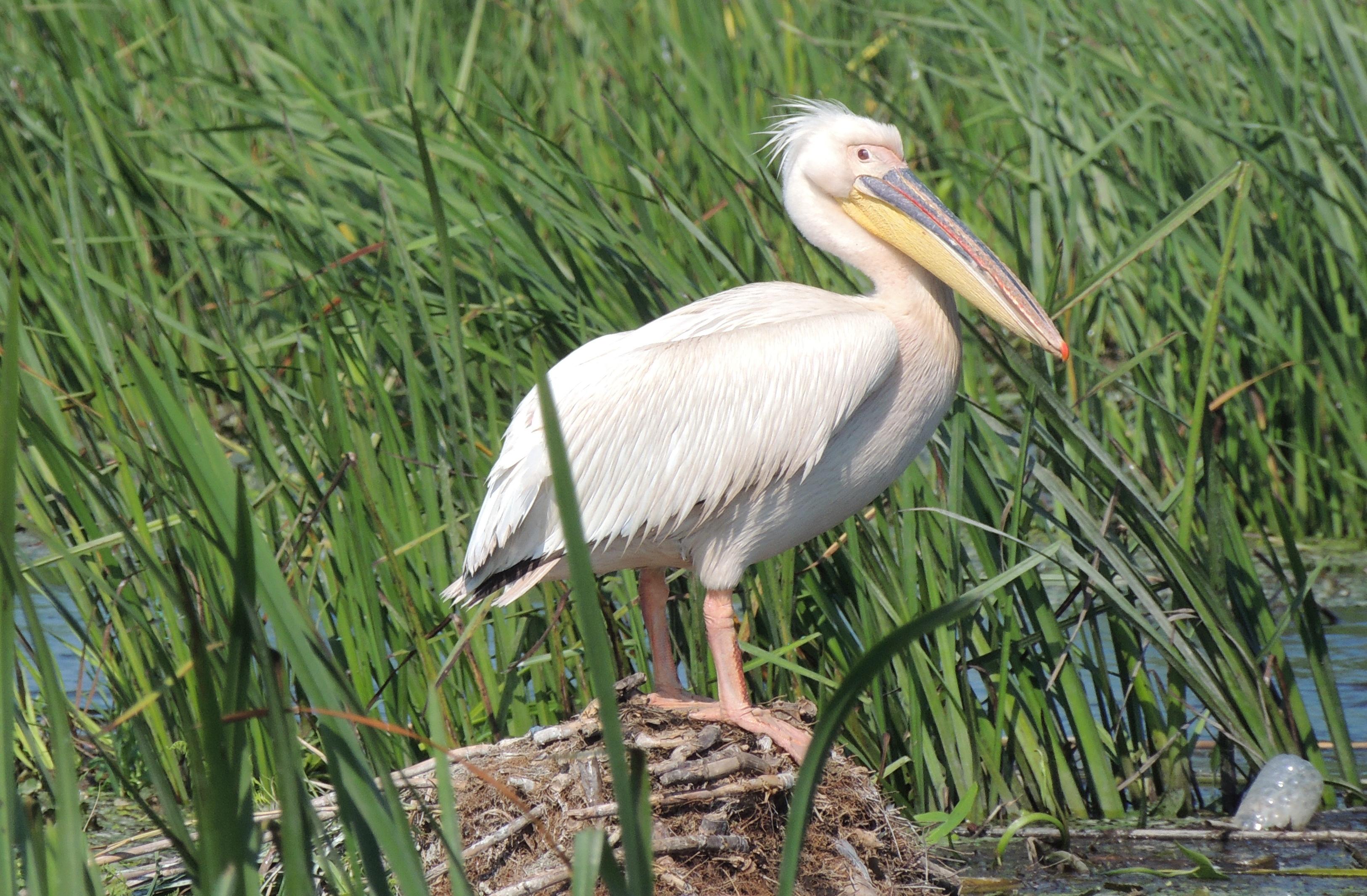 Taxonomie clasică și moleculară Biologia și ecologia reproducerii la specii de păsări de interes conservativ