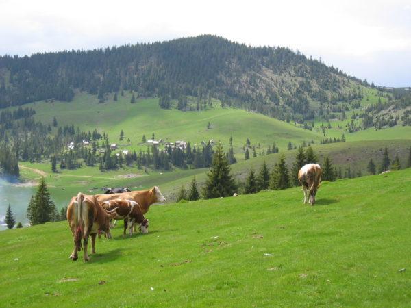 Ecologia peisajului